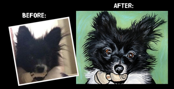 Pomeranian before and after