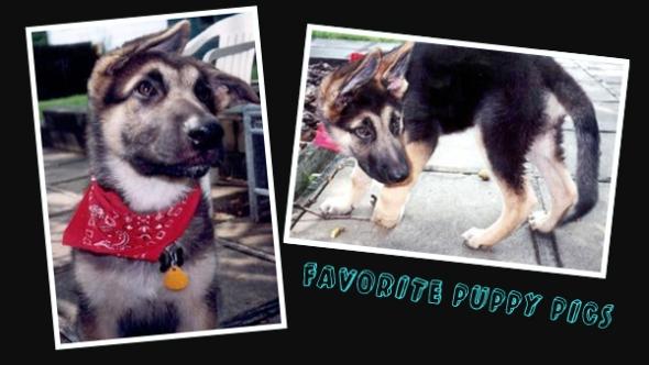 favorite puppy pics